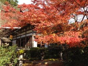 本堂周りの紅葉