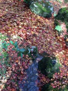 紅葉の小川
