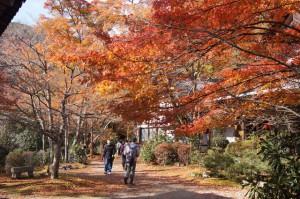 鐘楼周りの紅葉